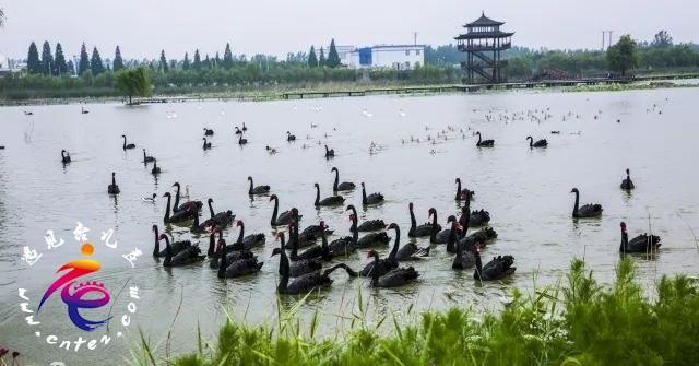 乘着春风,这个周末相约双龙湖湿地观鸟园,寻找春天的气息!
