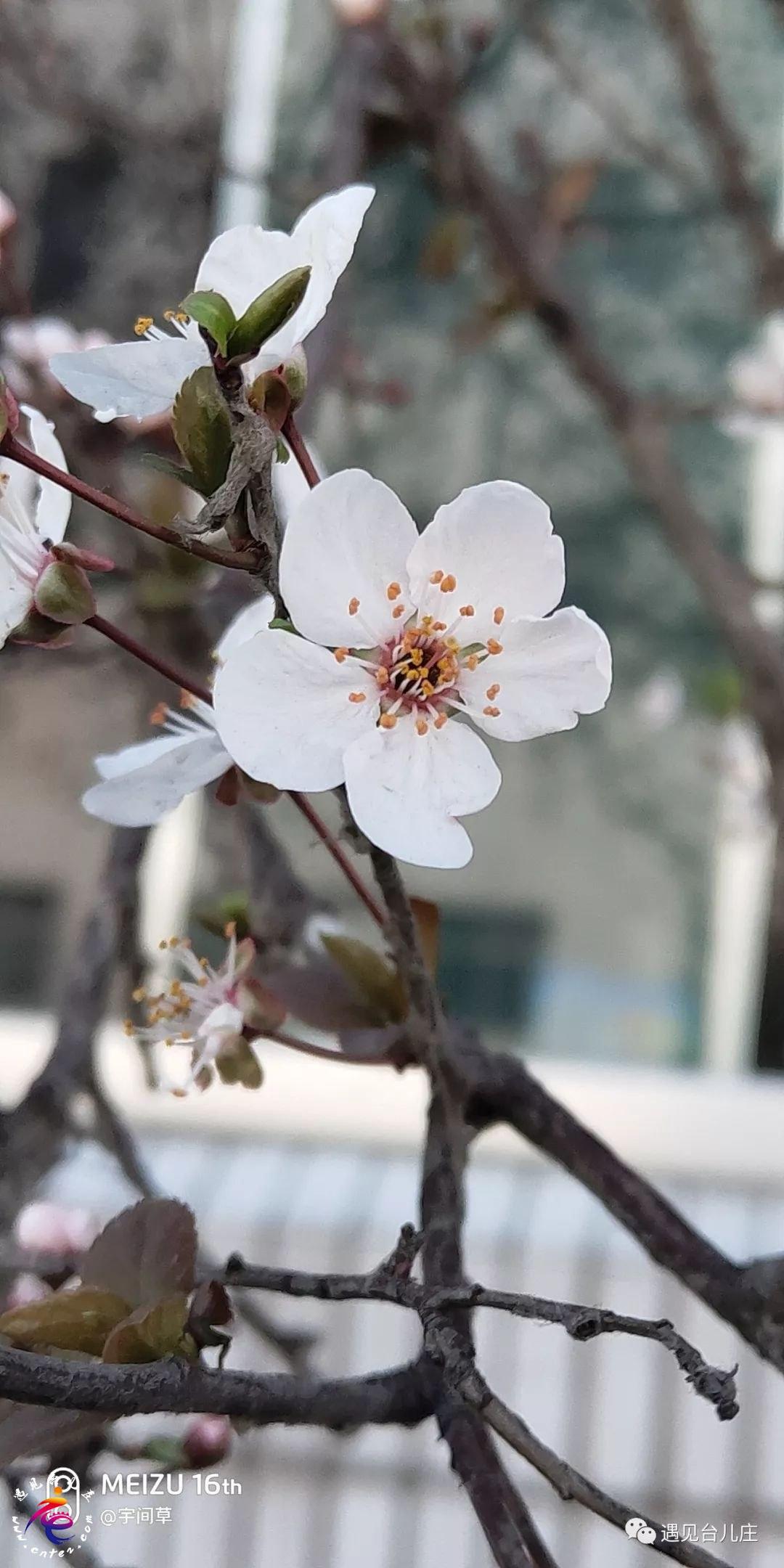 春天过半,樱花粉,迎春黄