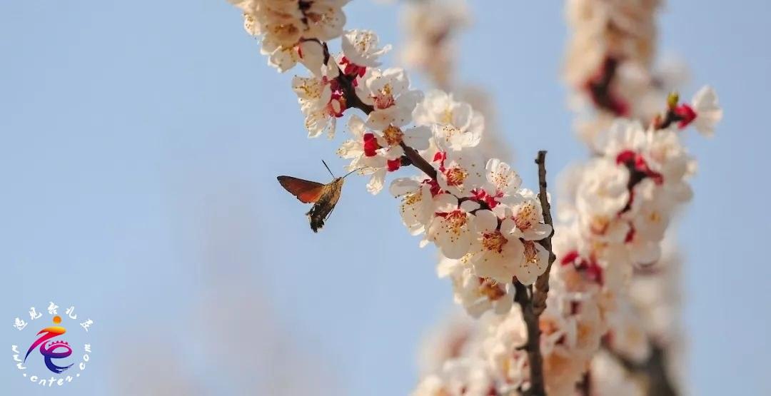和春天里的台儿庄古城一起心花怒放!