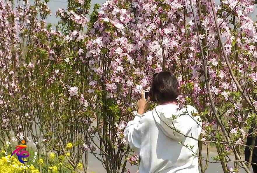 古城祥和庄园:人间四月清明天 踏青赏花正当季