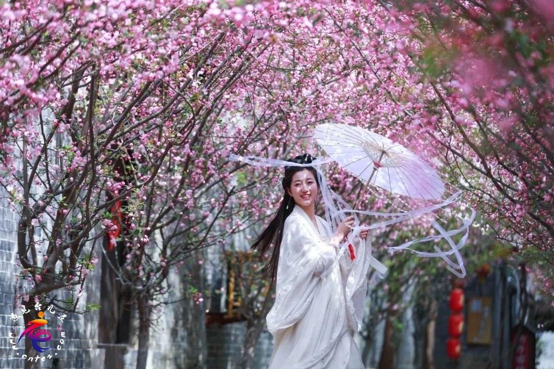 台儿庄古城,花开正旺,精彩演艺:吸引游客踏春游玩