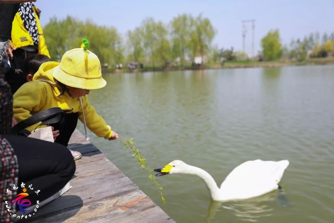 台儿庄古城引爆春季旅游市场,清明节假期共接待游客21.6万人次
