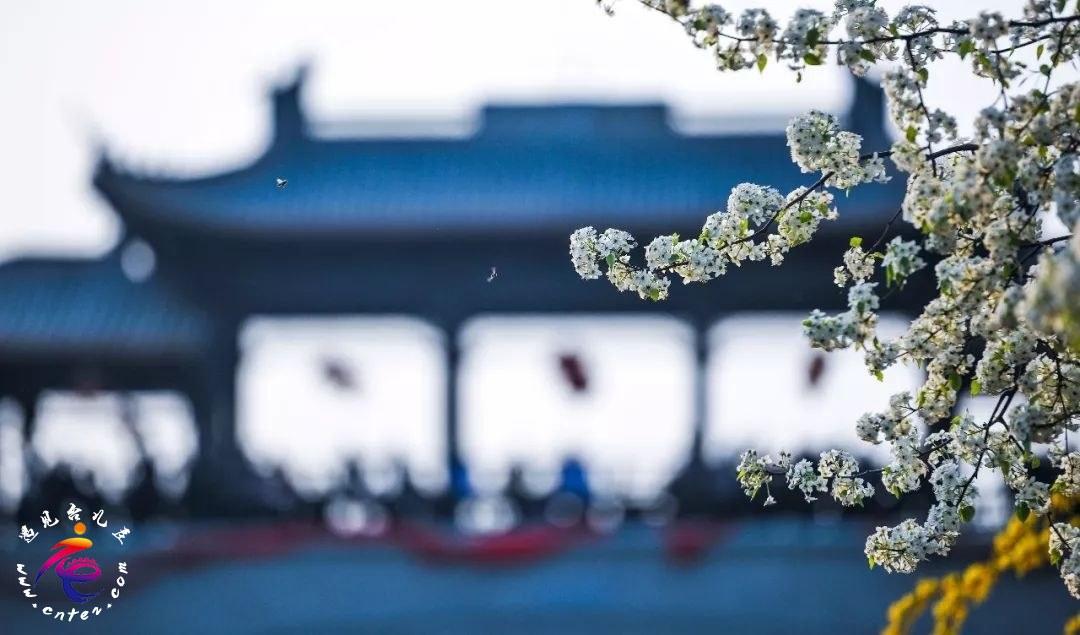 在台儿庄古城与客栈相遇,就像在古诗中安放的烟雨梦想