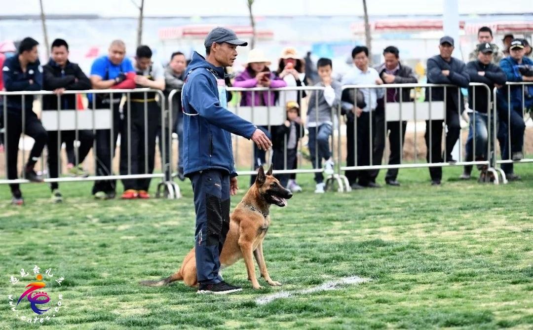 2019年第二届国际护卫犬IGP全国训练积分榜总冠军赛在台儿庄古城祥和庄园举行