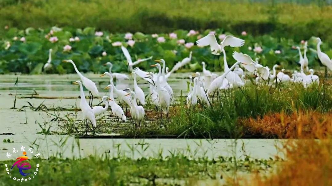 台儿庄新晋避暑地【运河湿地——涛沟河风景区】今日开始试运营