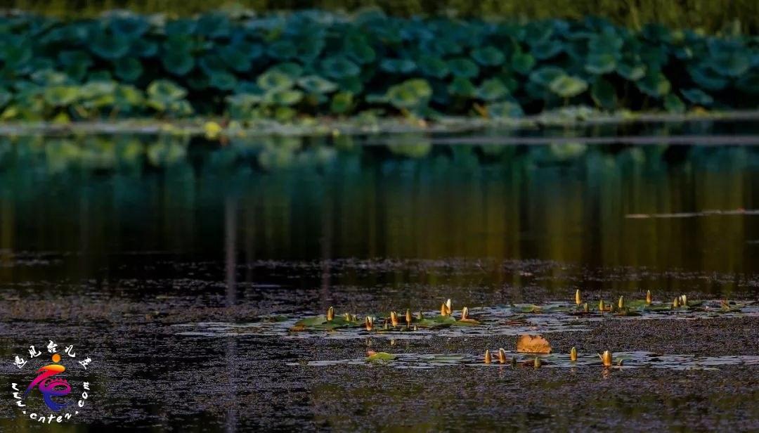 初秋好风景 | 来涛沟河湿地免门票啦,留一份宁静与美好给自己