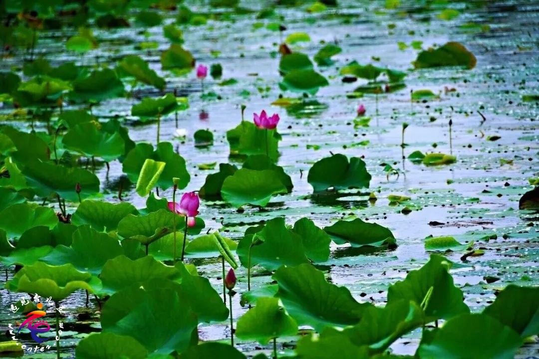 我说所有的秋都不如你 | 运河湿地自带美颜效果的打卡圣地