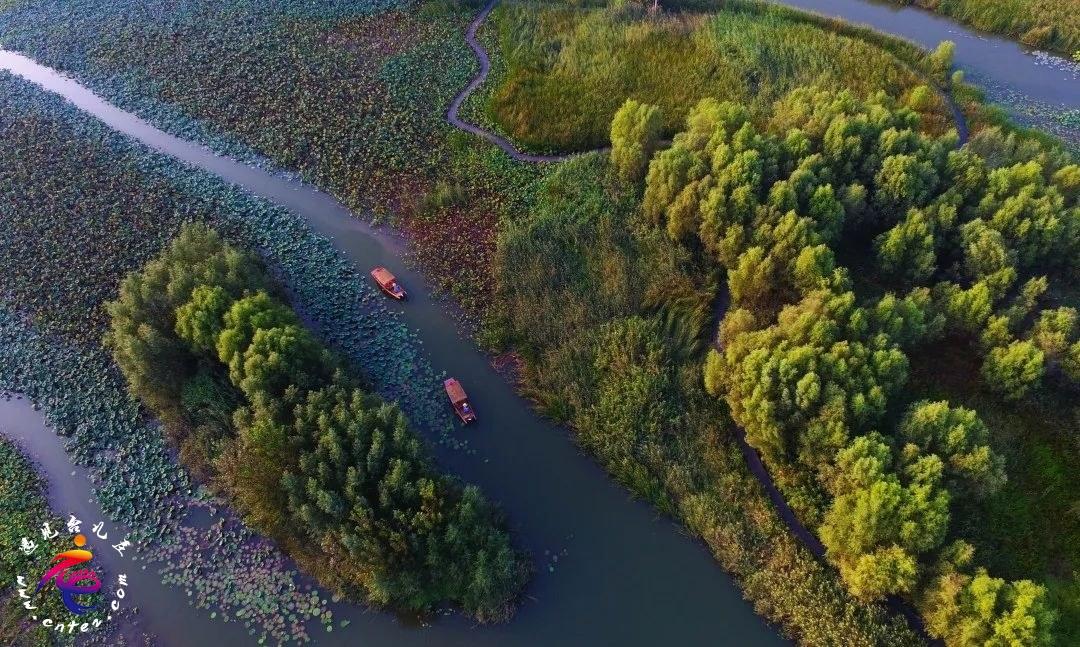 白露时节去湿地赏白鹭 | 台儿庄绝美湿地莺鹭成群,美到惊艳!