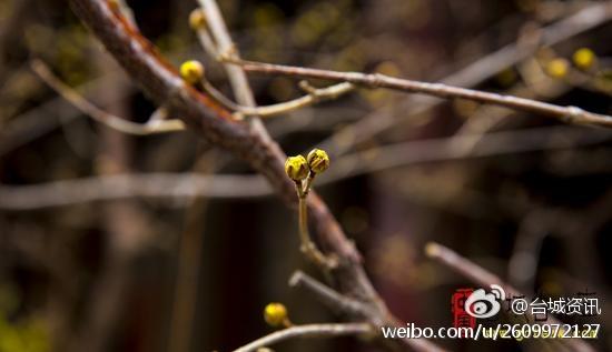 台儿庄古城:雨水时节