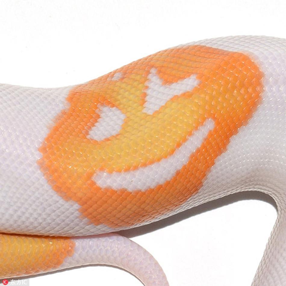 全身都是戏!美国蟒蛇自带微笑表情包