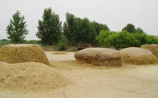以前台儿庄农村收麦情景,你还记得吗?