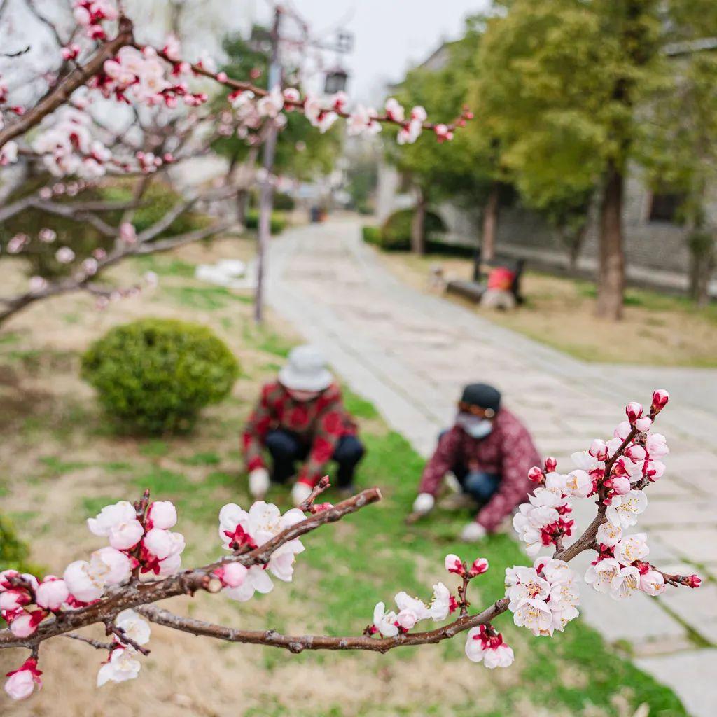 桃红、嫩绿、鹅黄、淡紫……台儿庄古城花满枝头美不胜收