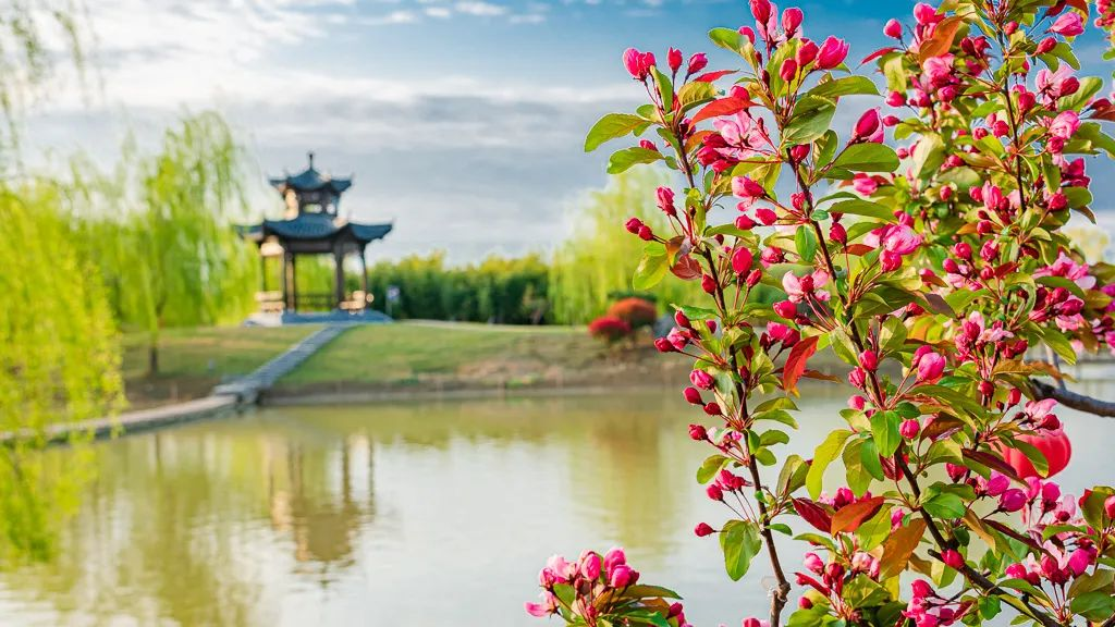 春暖花开,为你而来   双龙湖湿地观鸟园带你感受春天的颜色!