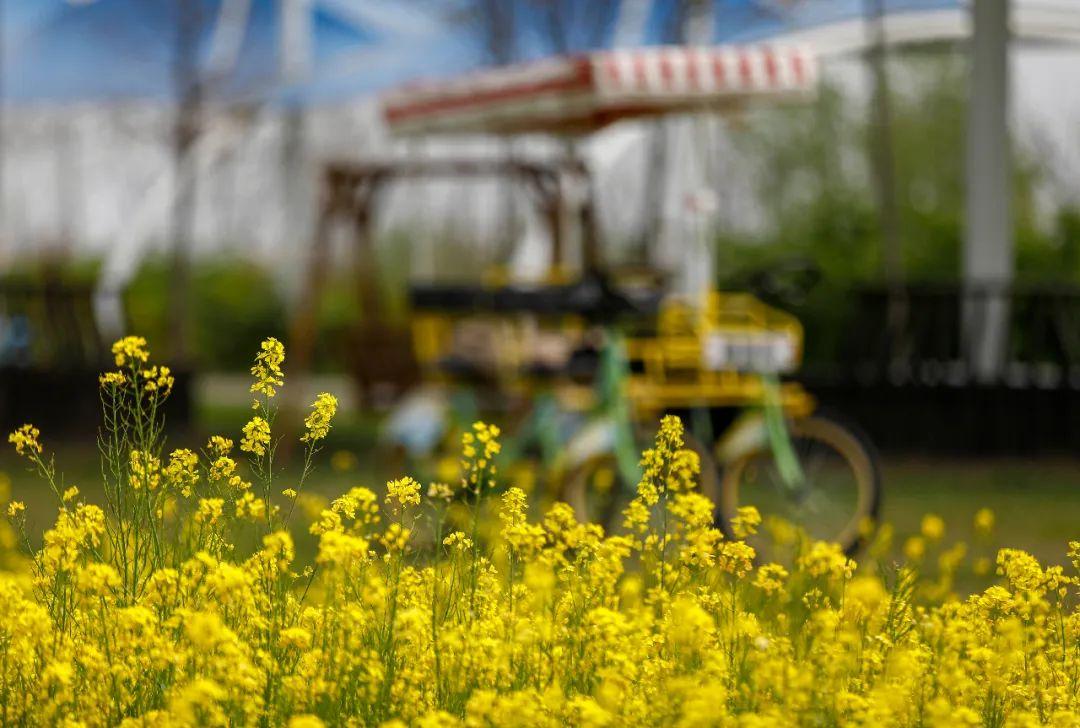 清明假期春色盎然鸟语花香丨双龙湖湿地观鸟园门票半价