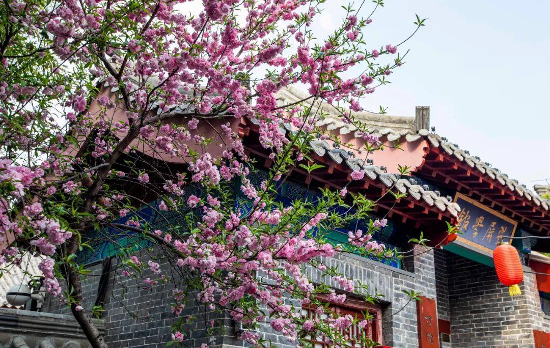 唯有春雨和春花不可辜负 | 春雨下的台儿庄古城,美成画!