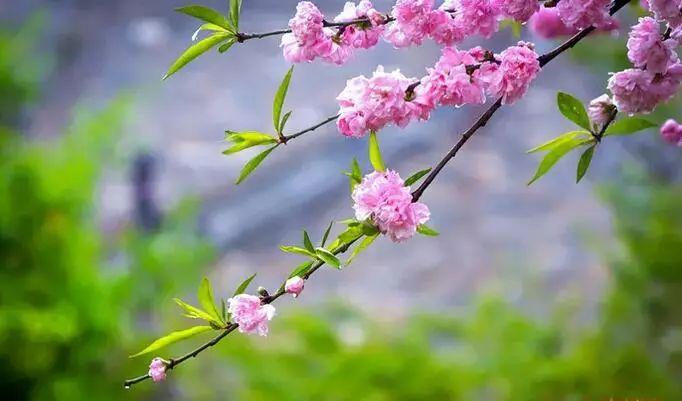 草长莺飞四月天,我把台儿庄古城的春天打包寄给你!