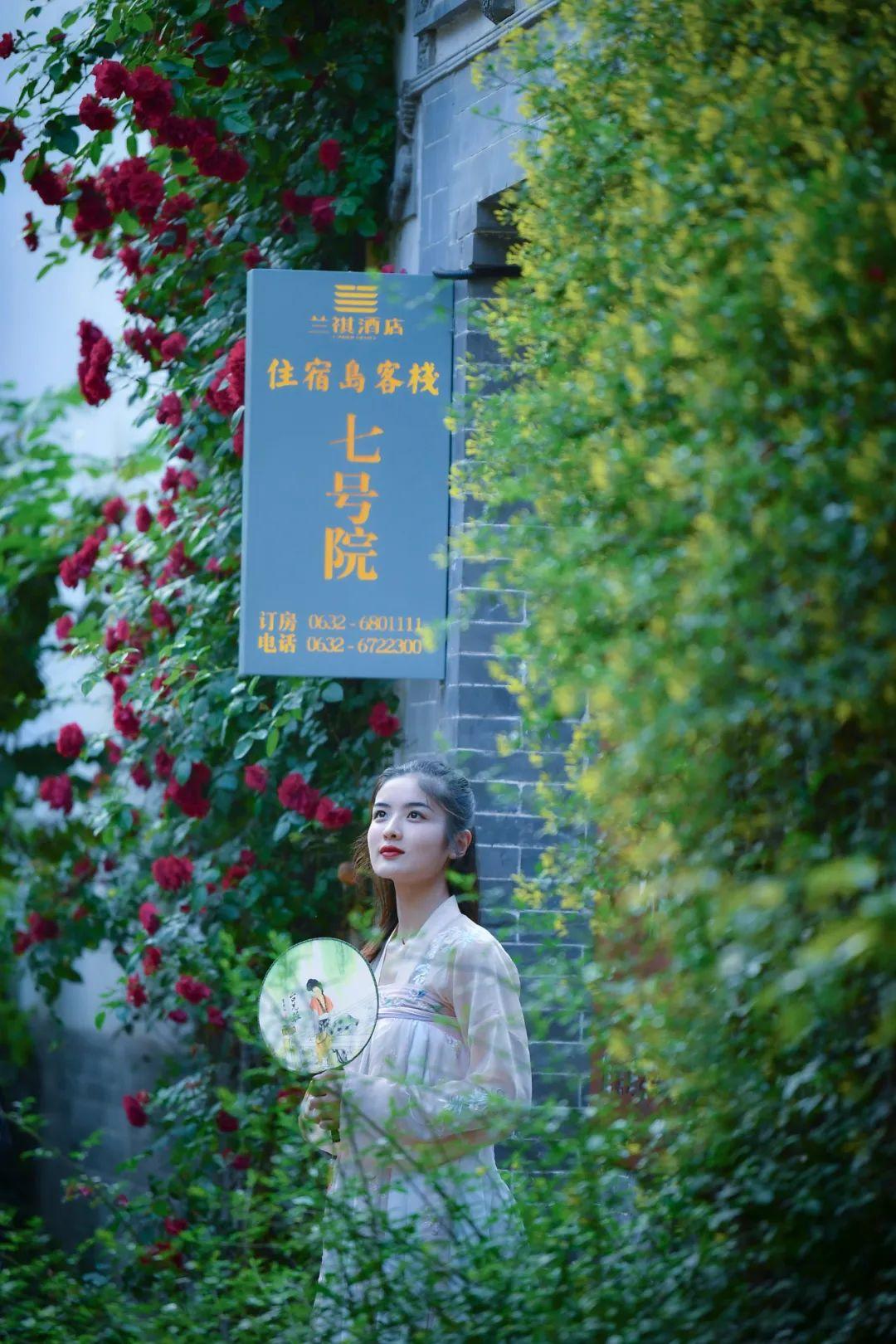 初夏五月,蔷薇花开,你要的浪漫与美丽,都藏在台儿庄古城里!