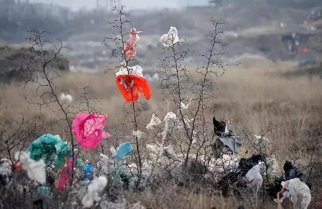 禁用!今年底,济南青岛城区商场、超市、外卖等禁用不可降解塑料袋