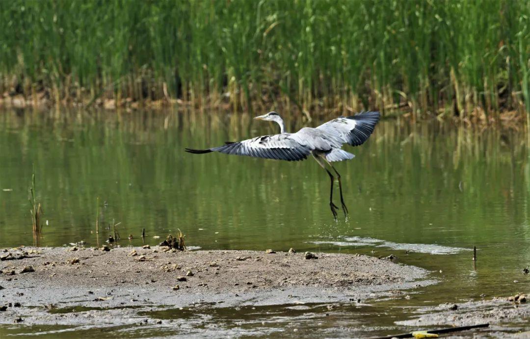 """""""荷""""你相约!第七届台儿庄运河湿地公园荷花节即将魅力启动!"""