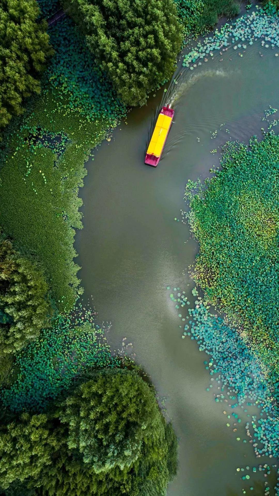 门票免费   天然氧吧,美景珍禽,紫色花海,醉美涛沟河湿地,夏日亲水好去处!