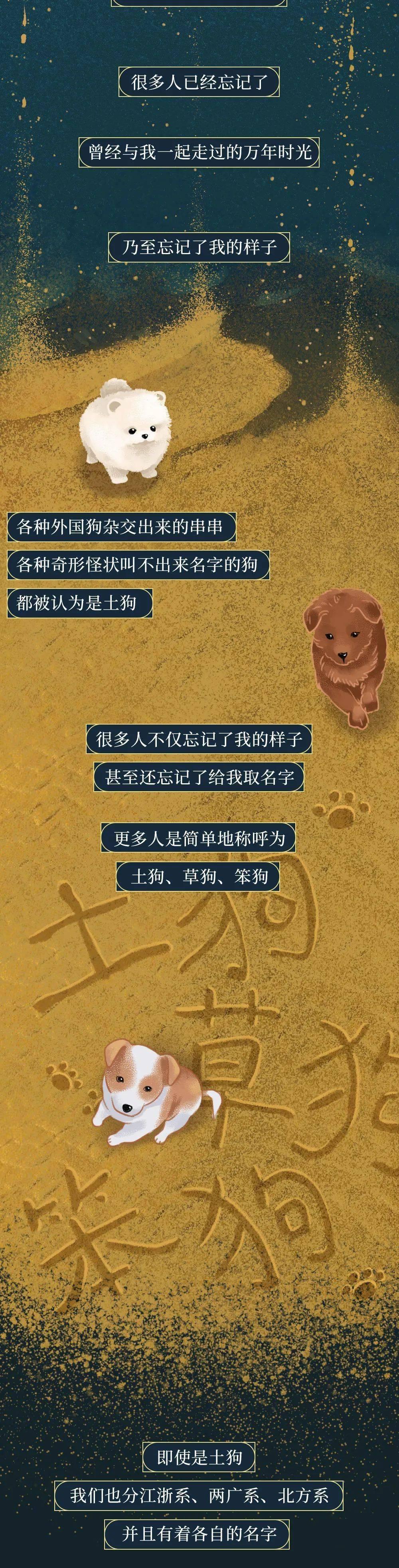 你凭什么看不起中国土狗?