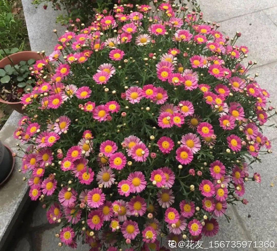 清明赏花,带上这份百花图谱,啥花都能叫上名,变身行走的识花机器…