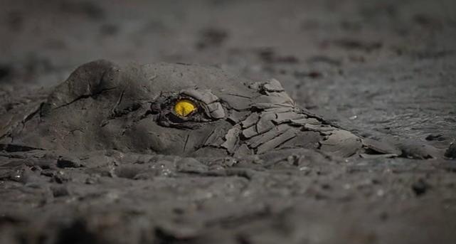"""32张看完""""全身发抖""""的照片:带你领略大自然凶残的一面"""